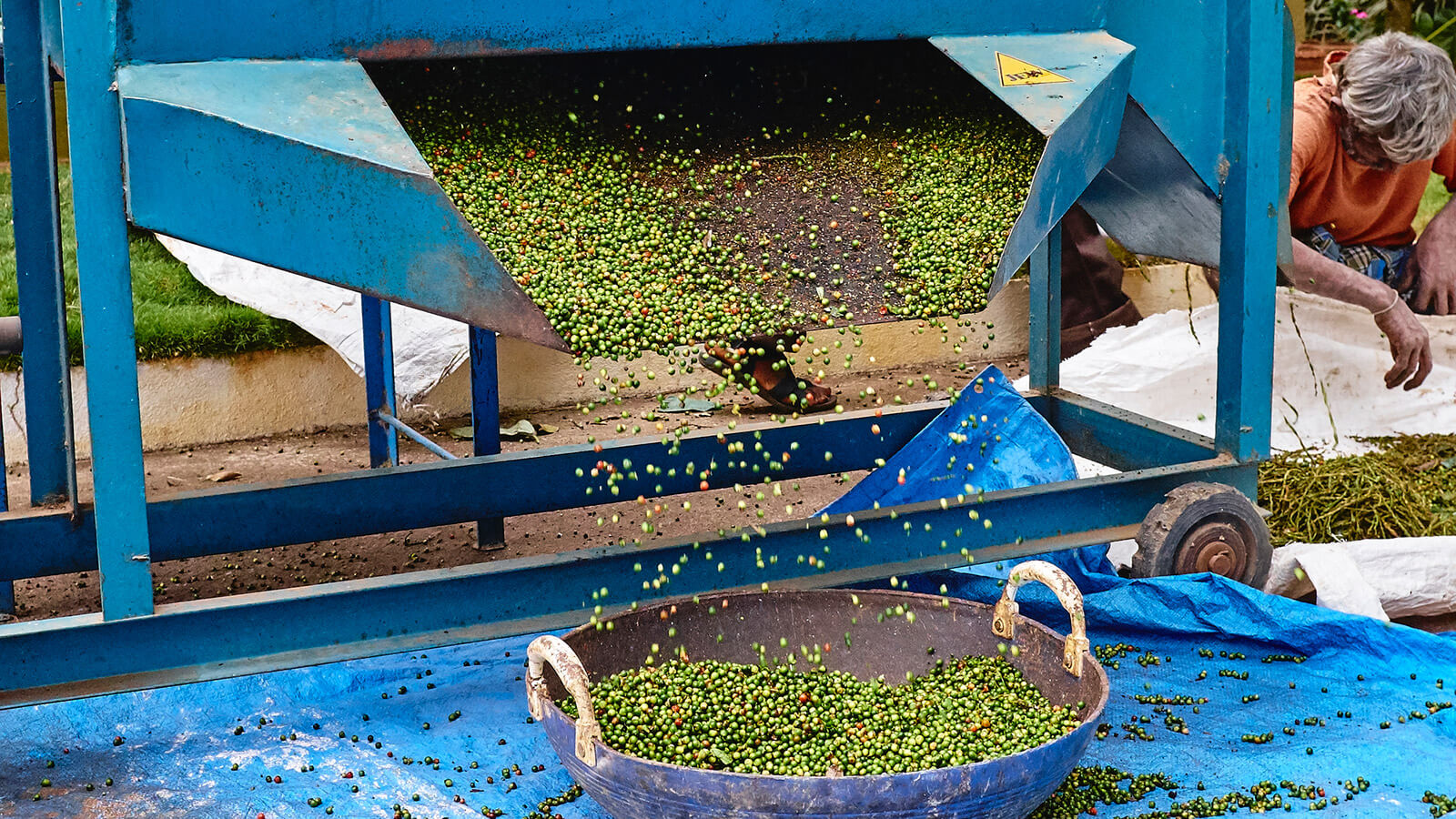 Peppercorn is poured into a sorting machine